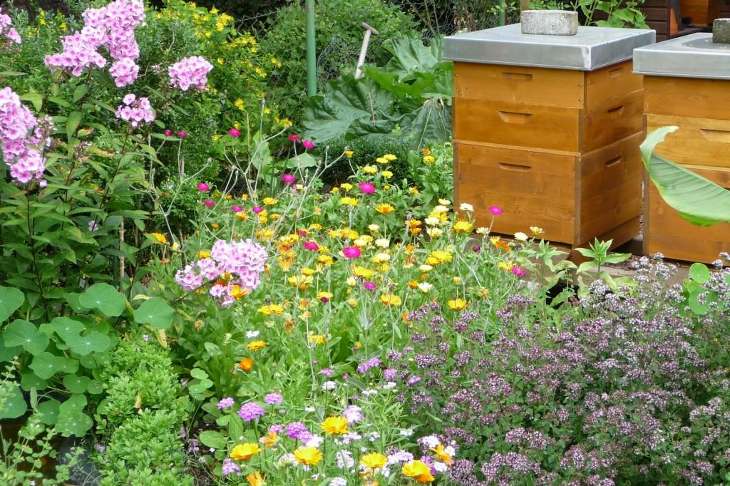 Eine Blumenwiese unterstützt die Artenvielfalt – nicht nur Insekten sind hier zuhause sondern auch Igel und Vögel.