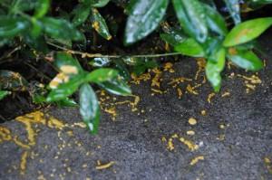 So kleine Bienen und so viele Kotspritzer. Das sieht gar nicht gut aus.