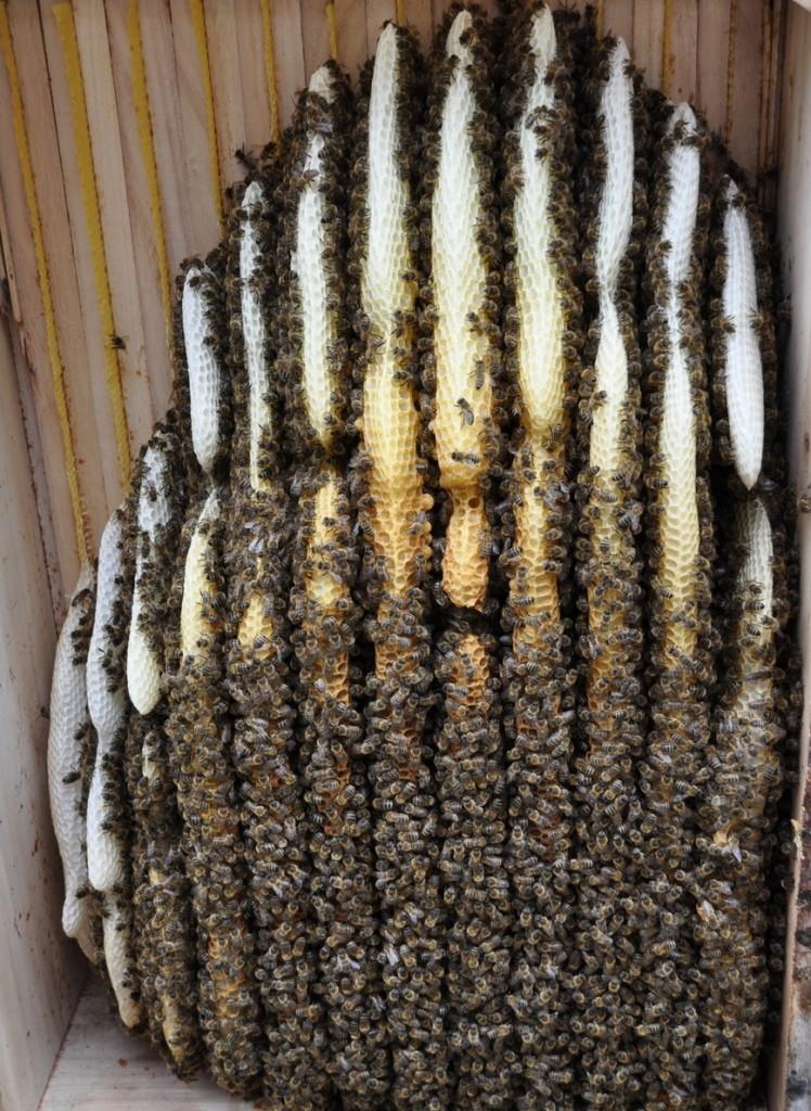 Der Blick in die Kiste beruhigt etwas. Scheinbar haben es die kranken Bienen rechtzeitig nach draußen geschafft. Innen sind keine Kotflecken zu sehen.