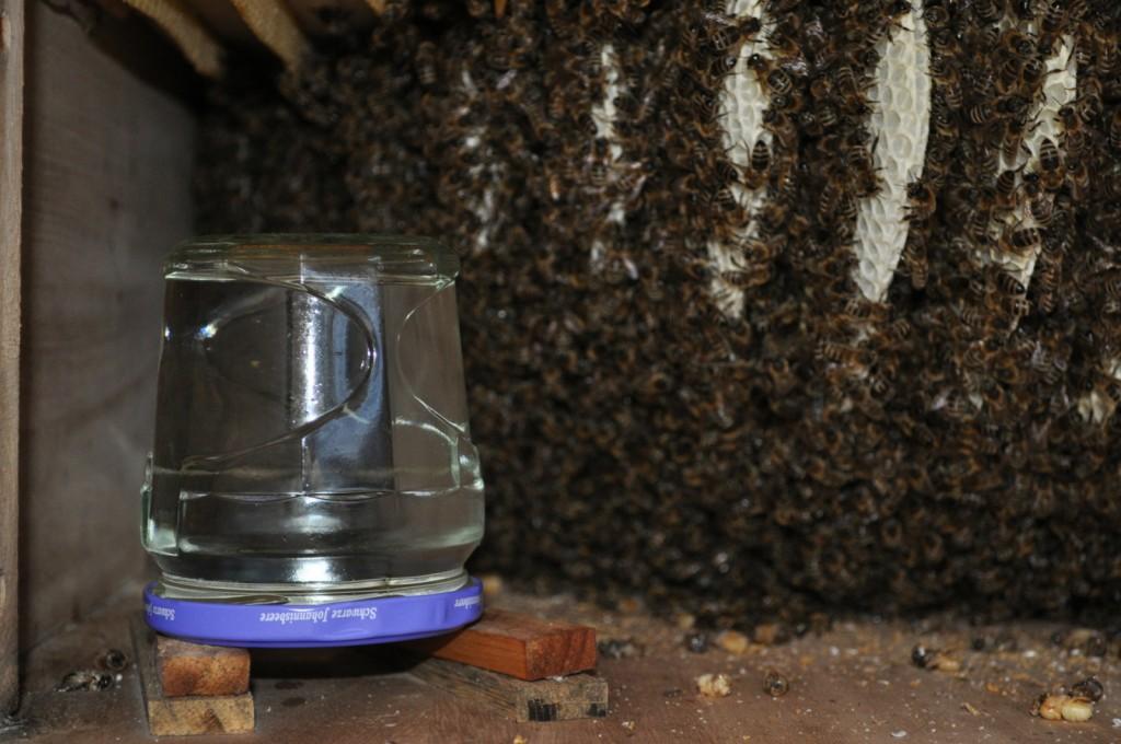 Ein Marmeladenglas mit Löchern im Deckel dient als Spender für die Honiglösung.