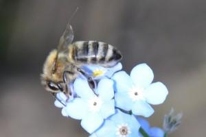 Das Interesse für die Bienen schärft auch den Blick auf die Pflanzen in unserer Umgebung.