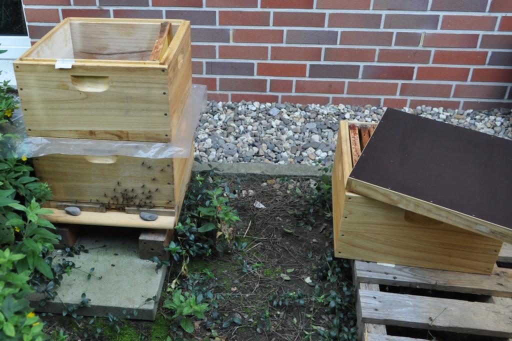 In der Beute befindet sich in der unteren Zarge der Brutraum. Die Folie trennt die Beute zur Futterzarge. Bei der Fütterung wird eine Folienecke umgeschlagen, damit die Bienen nach oben kommen können. Auf der Palette steht die Zarge mit den entnommenen leeren Rähmchen.