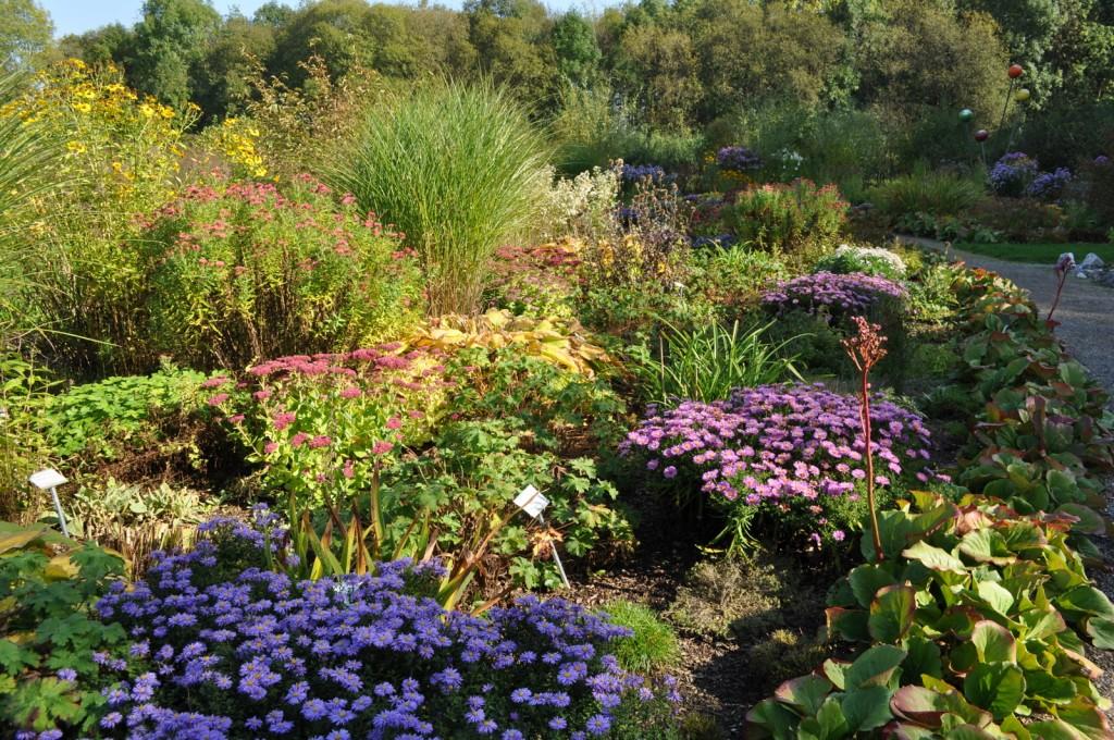 Eindeutig: Wir brauchen mehr Garten, um auch mal so prächtige Beete anzulegen - natürlich mit Blumen, die für Bienen interessant sind....