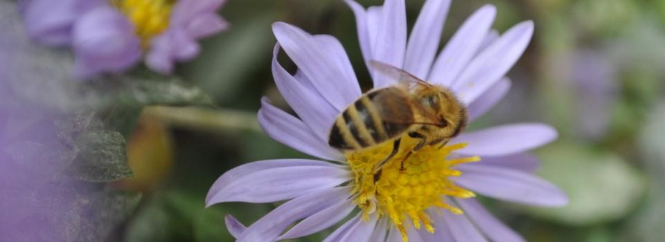 Der Bienenblog
