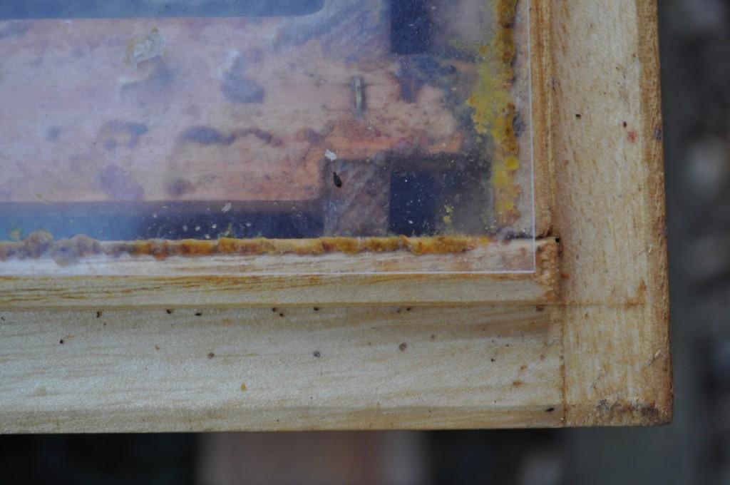 Da hat Zugluft keine Chance: Mit Propolis haben die Bienen Folie und Holzbeute aneinander gekittet.