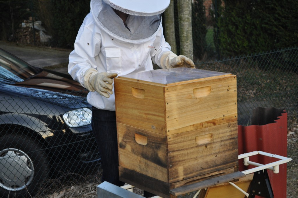 Mit dem zweiten Brutraum ist jetzt genügend Platz vorhanden für neue Brut und Bienen .