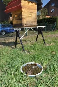 Eine Bienentränke direkt am Stock kann den Bienen schaden.