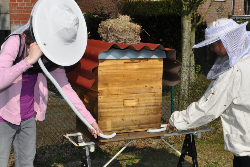 Was machen denn die Mädchen dort mit den Schläuchen, die sie ans Einflugloch halten? Sie belauschen die Bienen.