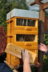 In dieser Beute bauen die Bienen frei ohne Rähmchen über alle Etagen. Lediglich drei gekreuzte Stäbe verleihen Stabilität.