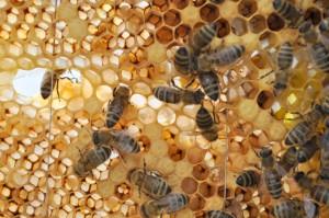 Das Brutnest ist recht locker belegt. Oder sind nur gerade viele Bienen geschlüpft?