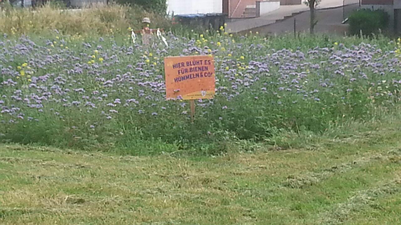 Blumenwiese Unkraut Gegen Blumen Der Bienenblog