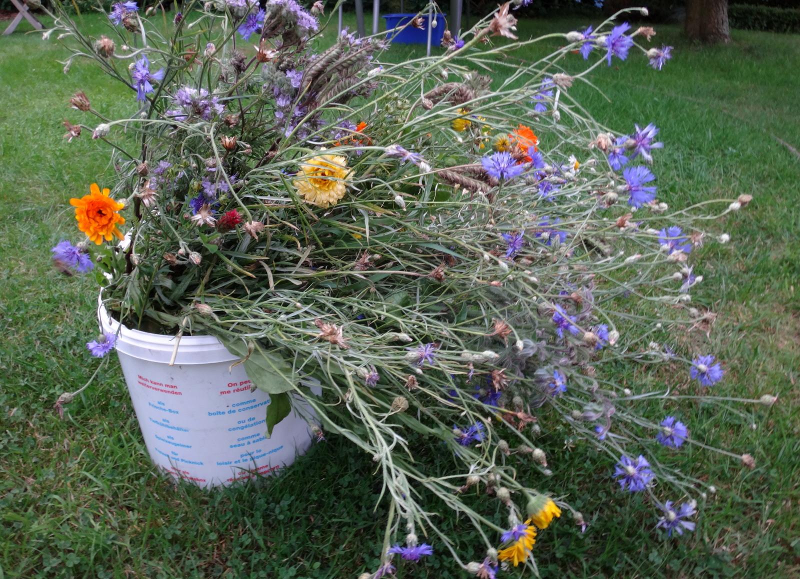 Blumenwiese Kahlschlag Gegen Gansefuss Der Bienenblog