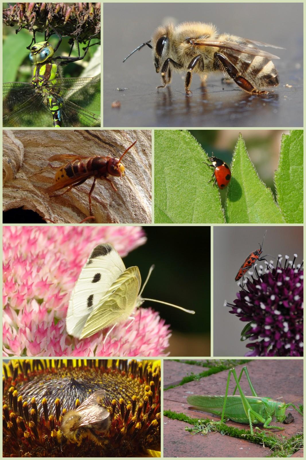 15-08-23 Libelle