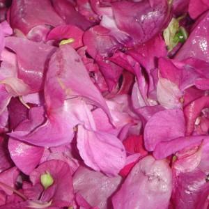 Aus den Springkrautblüten lässt sich leckeres Gelee herstellen.