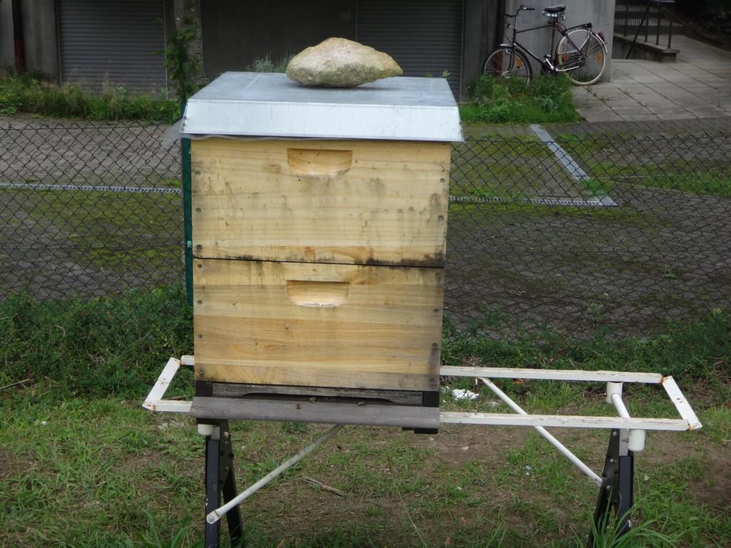 Nach dem Einengen: Der untere Brutraum ist weg, jetzt dienen der frühere obere Brutraum und der Honigraum als Brutstätte.
