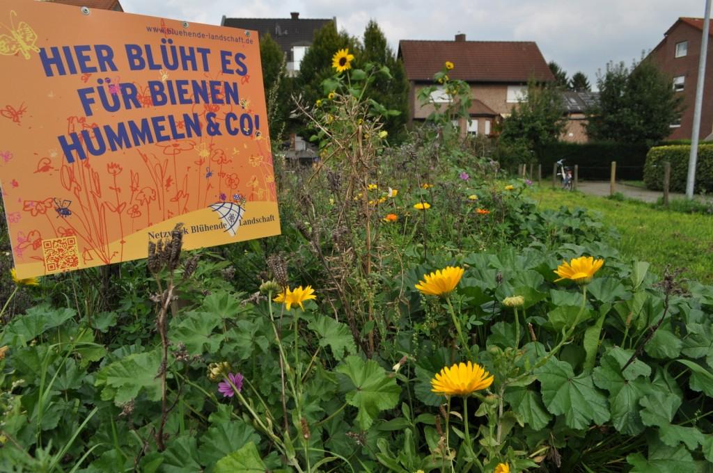 Gelb ist die vorherrschende Farbe in der Blumenwiese: Ringel- und Sonnenblumen leuchten hell.