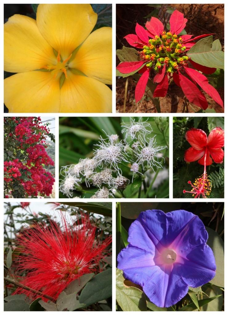 Flora Kamerun 1