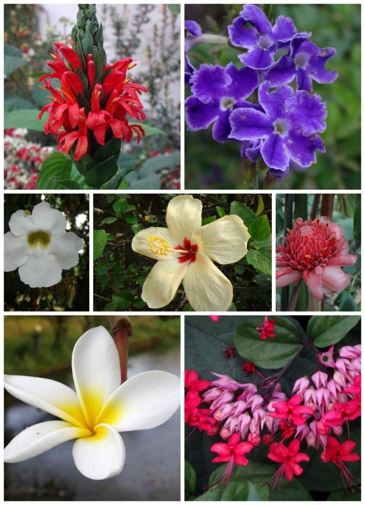 Kamerun Flora 2