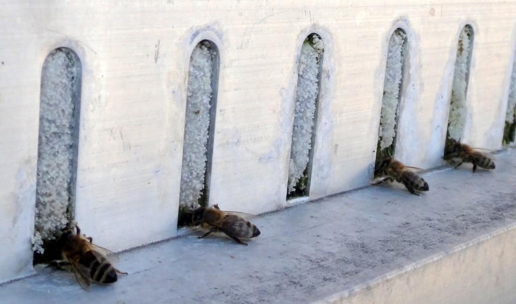 Na, hier wäre doch noch ein Platz an der Tränke frei. Mein Nachbar erzählte, während die Sonne auf den Balkon schien, seien hunderte Bienen geflogen.