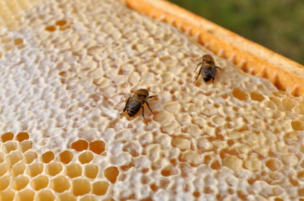 Futter ist noch vorhanden, doch teils sitzen tote Bienen auf den Waben.