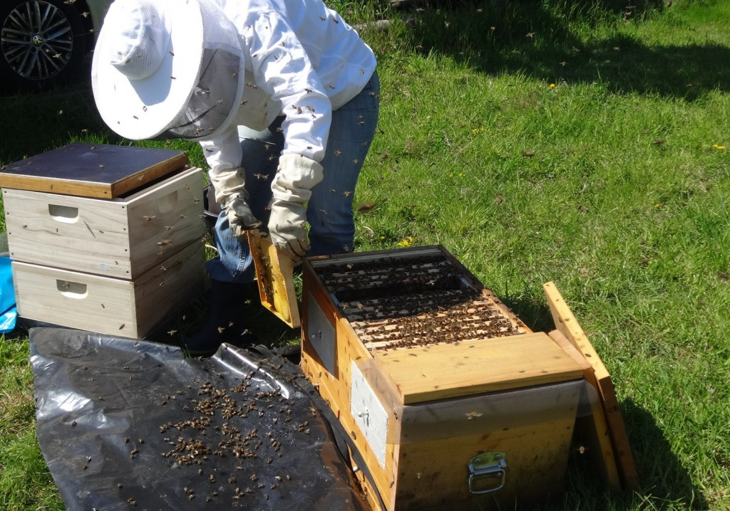 Utensilien zum Abfegen: Smoker (damit die Bienen ihre Honigblase füllen), Feger;-) sowie leere Zargen mit Boden und Deckel (für die abgefegten Waben).