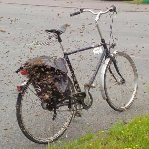 """""""Na, wohin soll es denn gehen?"""", möchte man diesen Schwarm fragen, der gerade in die Radtasche einzieht."""