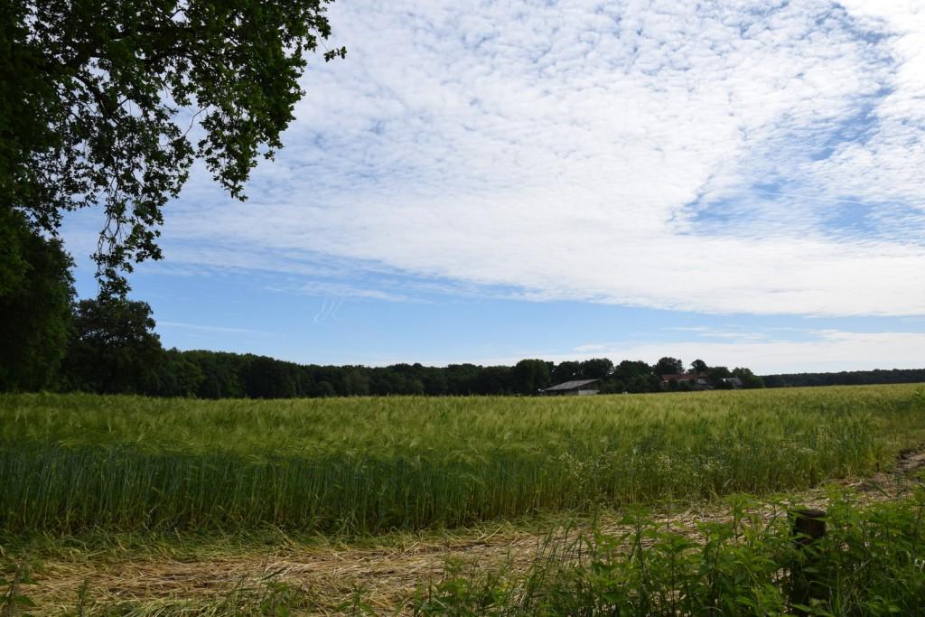 Ständig änderten sich die Wolkenformationen über dem Gerstenfeld.