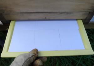 Den Varroaschieber habe ich mit Papier bestückt, damit das Gemüll die Kunststoffschale nicht verklebt.