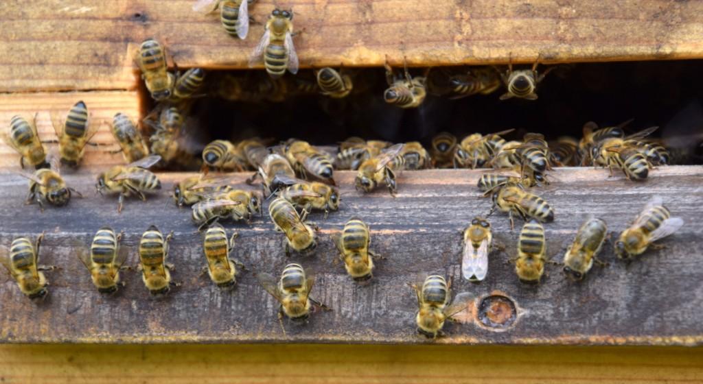 Was macht die fleißige Biene am Samstagnachmittag? Richtig! Sie putzt. Zum Beispiel das Anflugbrett.