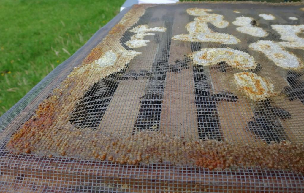 Dieses Foto habe ich für Fjonka herausgesucht, die sich nach der Gewinnung von Propolis erkundigte. DIe Bienen haben das Netz am Zargenrand mit breiten Propolis-Streifen verklebt. Wenn ich es verarbeitet habe, werde ich berichten.