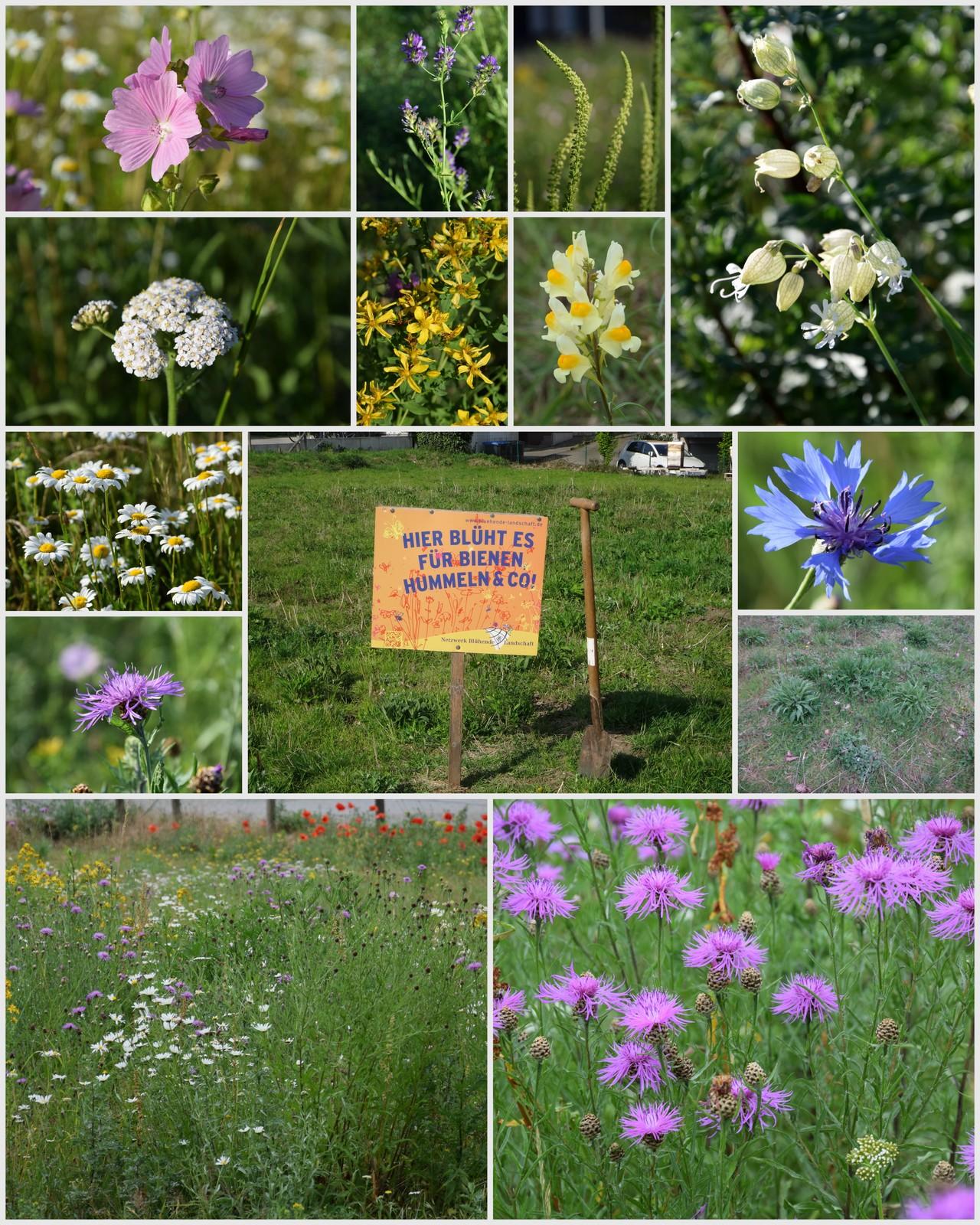 Bienenweide Archive Der Bienenblog