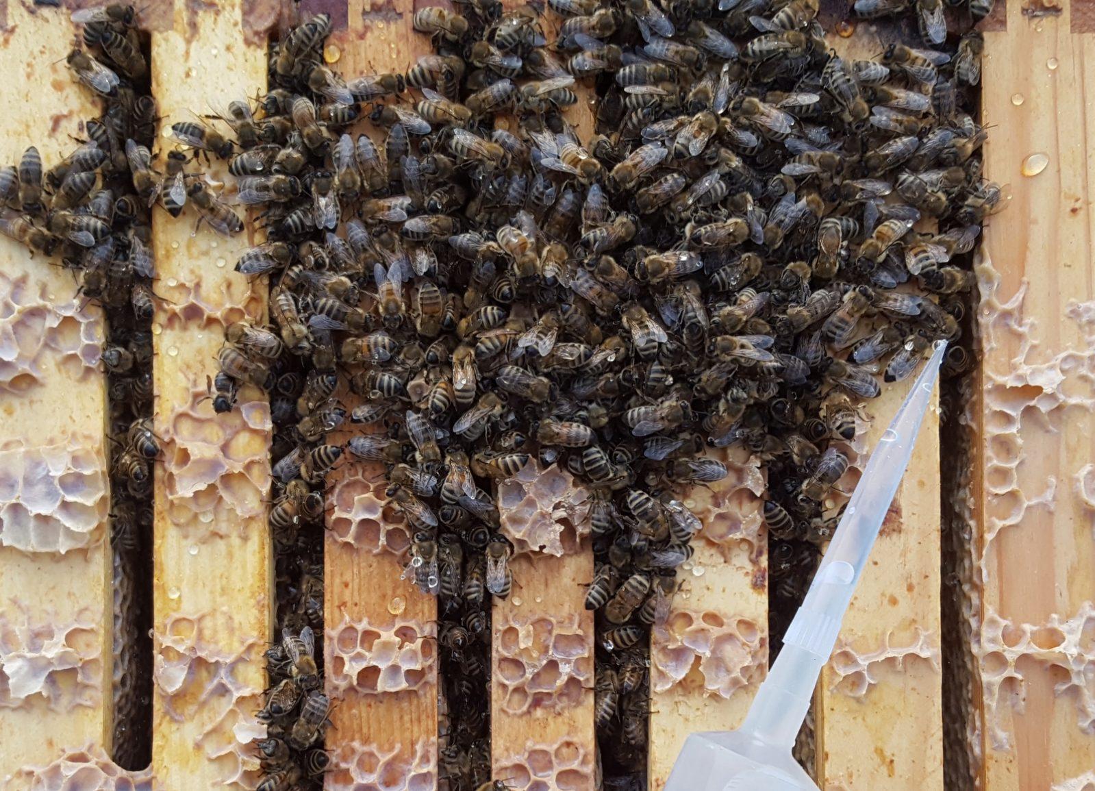 m.Dochten Varroa Imkerei,Imker,bee,beekeeping,Bienen Nassenheider Verdunster